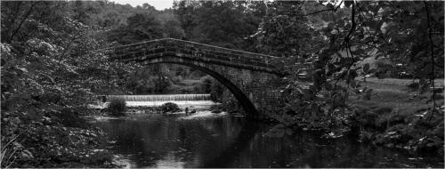 Beginners Com - Dove Bridge - Tim Stokes