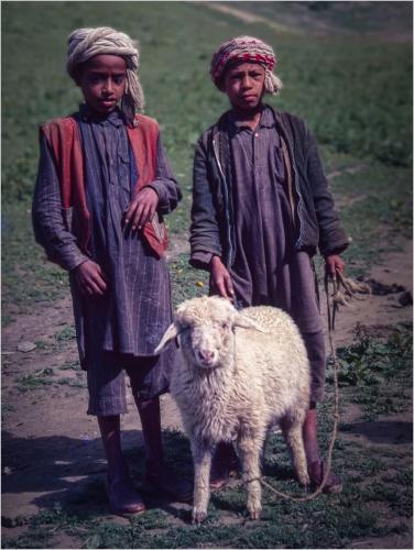 Intermediate Com - Berber Shepherds - Stephen Oakes