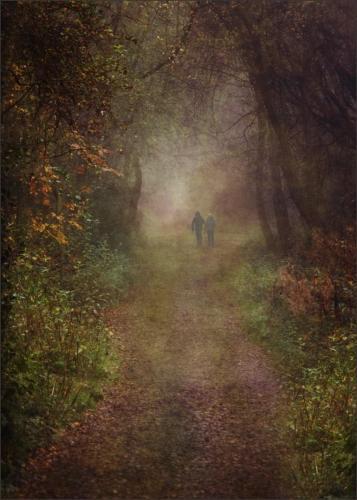 Advanced Com - Misty Autumn Walk Steve Albutt-min