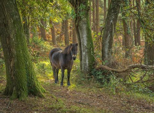 Intermediate HC  Forest Walk Kay Marples