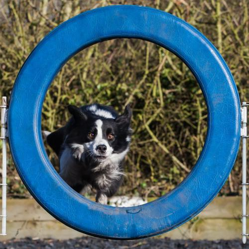 Lola-at-the-Tyre