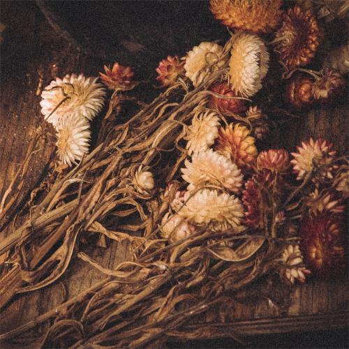 1 Autumn flowers