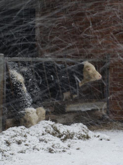 1 Blizzard conditions