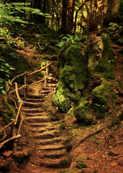 P Pathway through Puzzle Wood