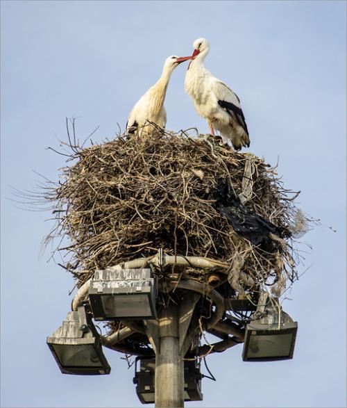 Beginners Pdi Comm Love Nest Sue Stokes
