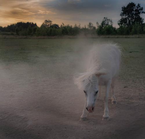 Inter Dust Bath Carolyn Whetton Comm (1)
