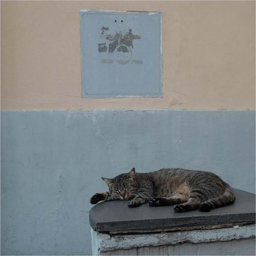 Inter LET SLEEPING CATS LIE Anne Wilcox Comm (1)